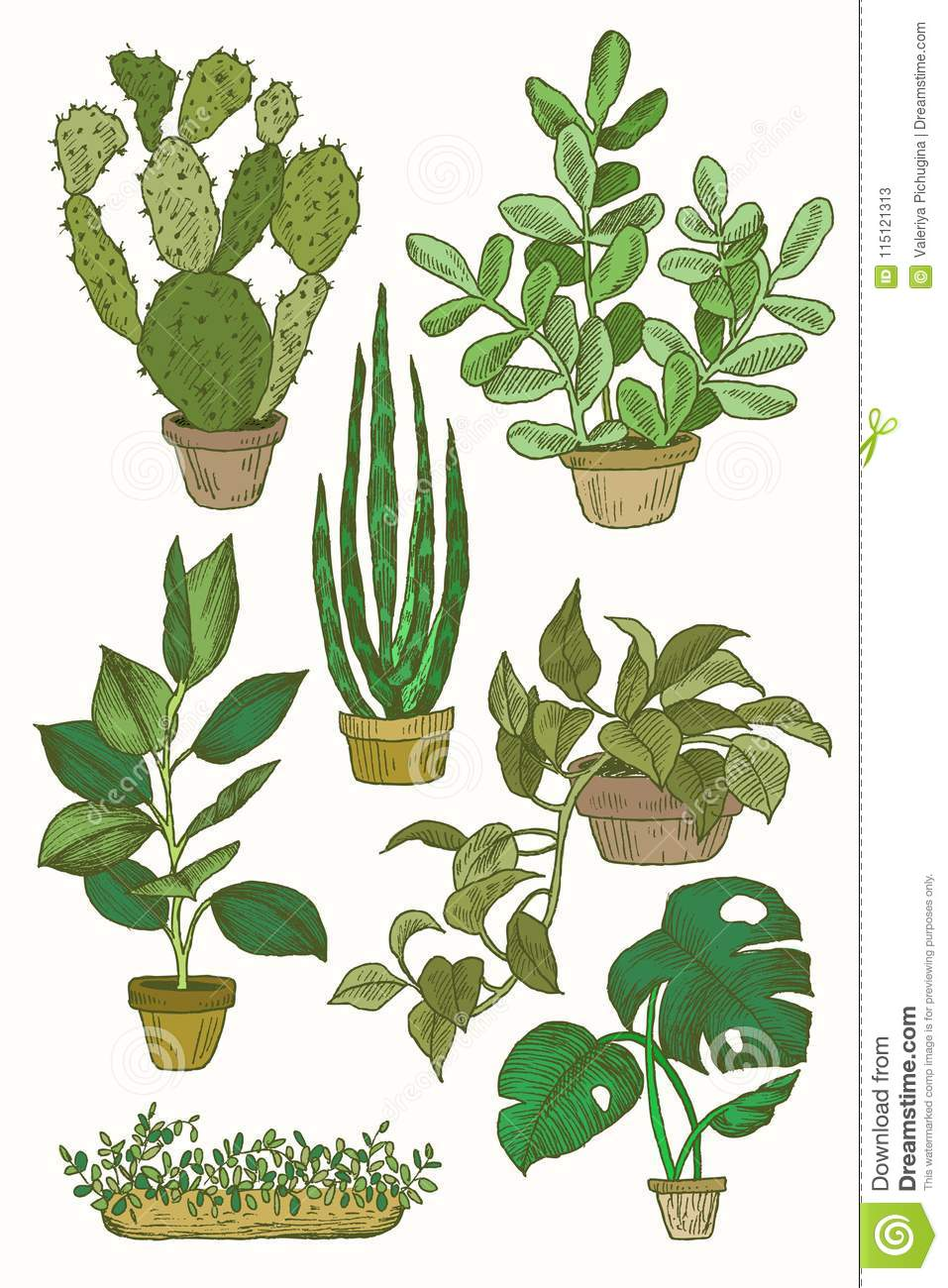 indoor home office plants royalty. Royalty-Free Stock Photo. Download Illustration Of Houseplants, Indoor And Office Plants Home Royalty ,