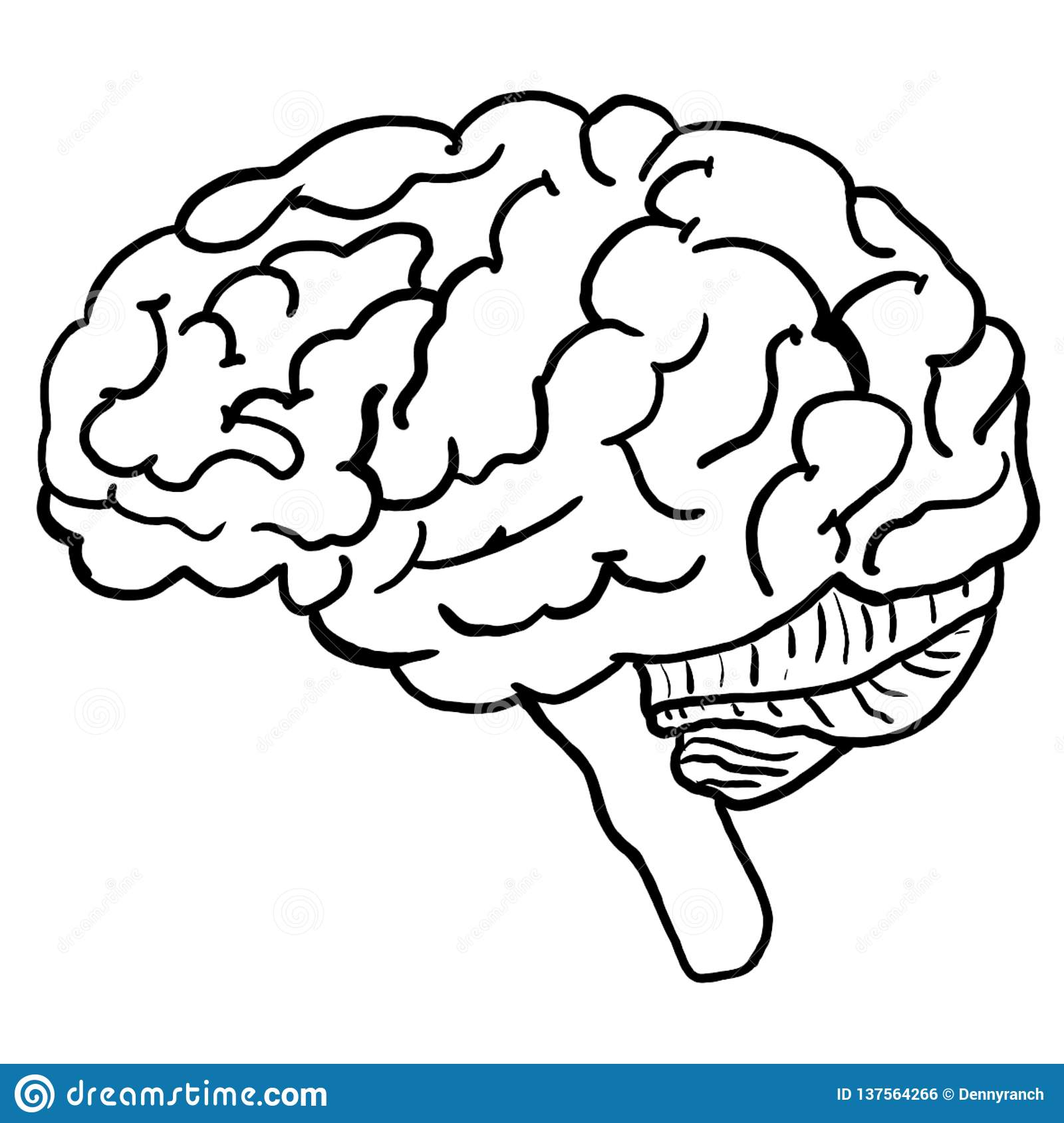 Illustration Of Human Brain Anatomy Coloring Page Stock ...