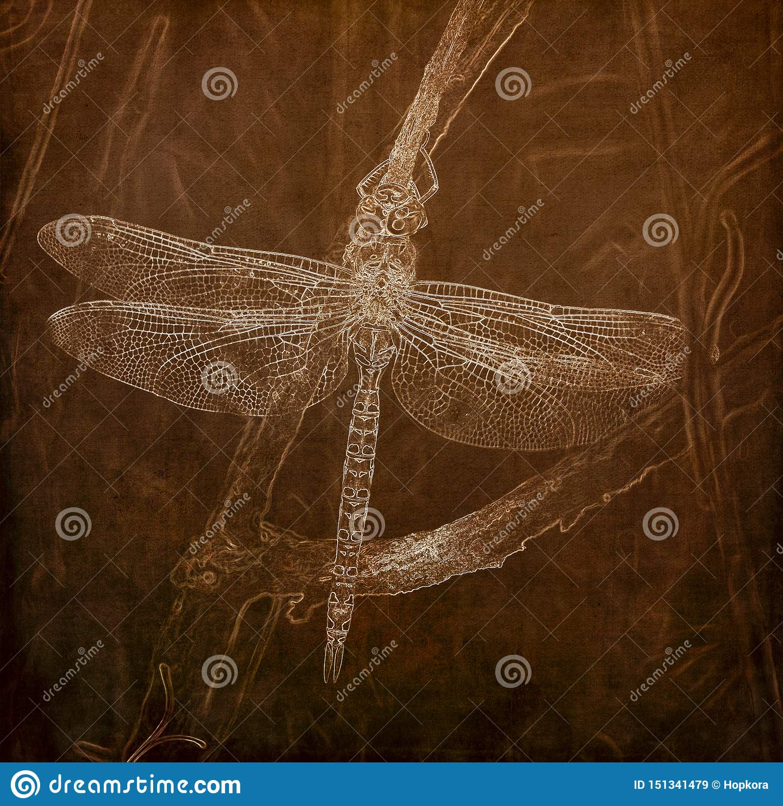 Illustration i Sepia av entailed mer darner sländaAeshna palmata som hänger från en trädlem i skuggan under värmen av