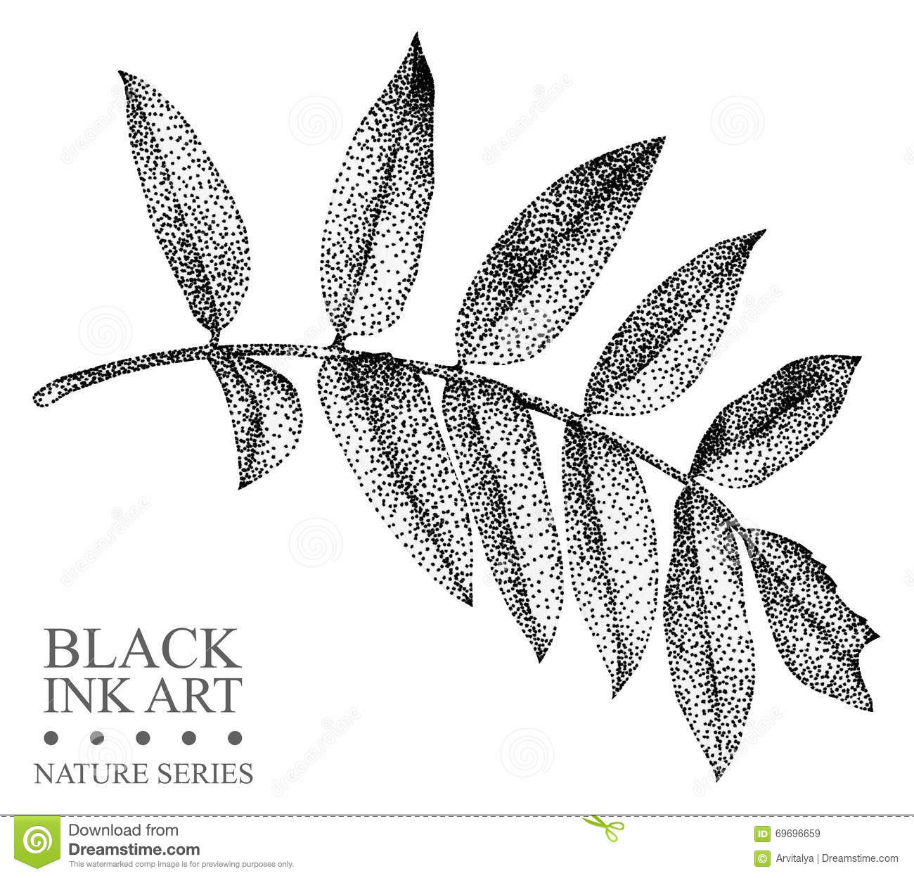 Illustration With Leaf Of Rowan Drawn By Hand With Black