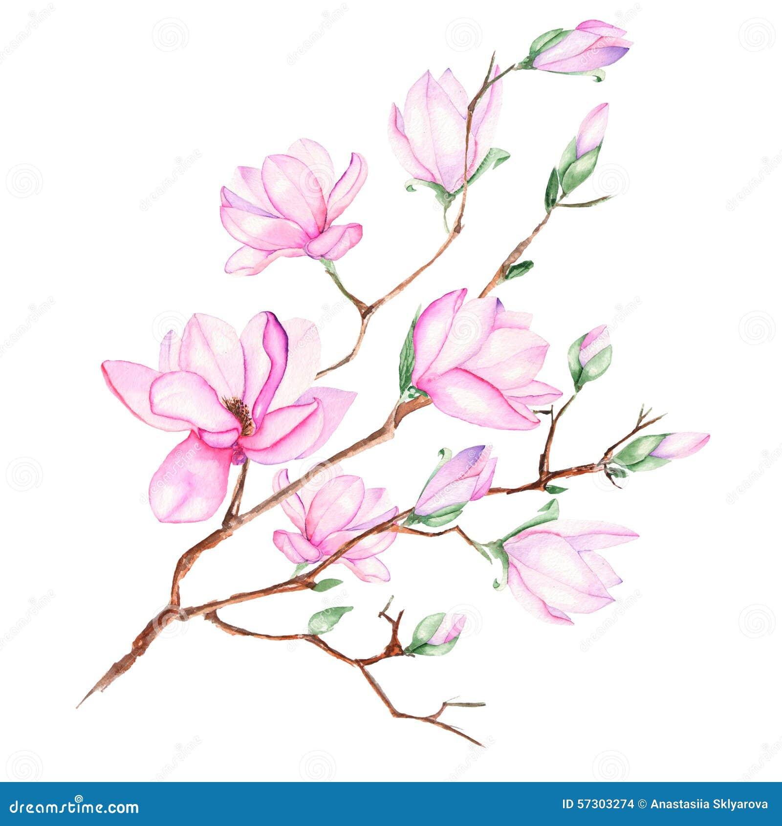 magnolia branch clip art - photo #11