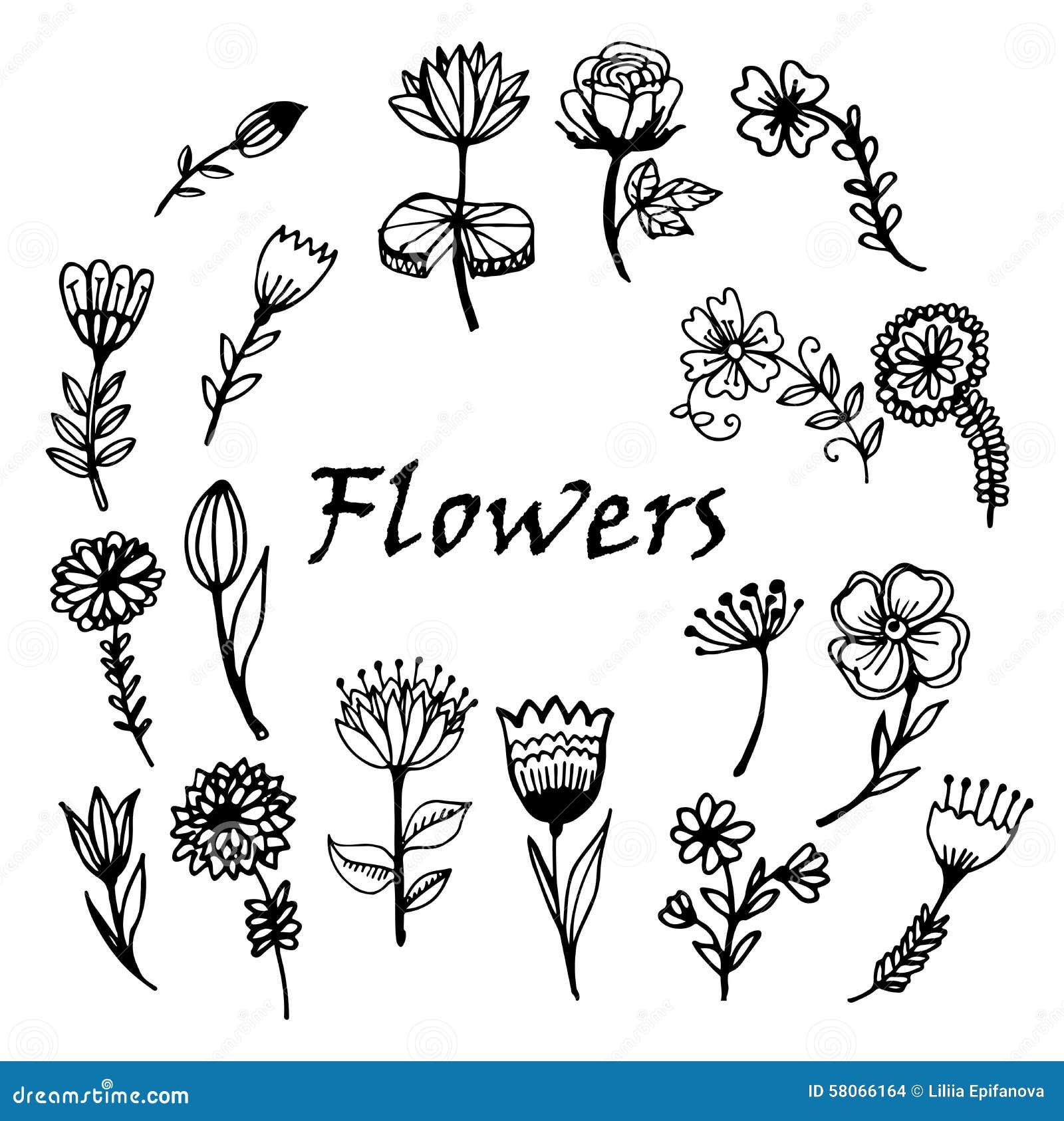 Illustration peinte à la main de croquis de griffonnage de fleurs