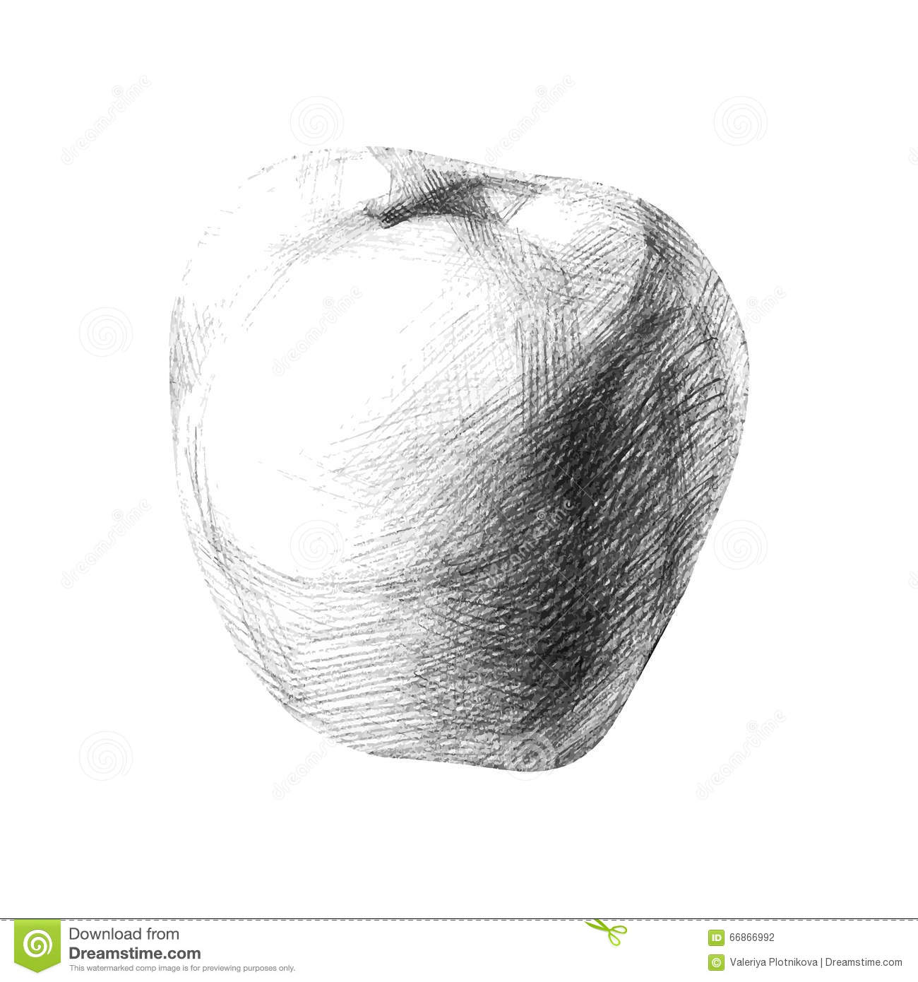Illustration with a pencil sketch apple