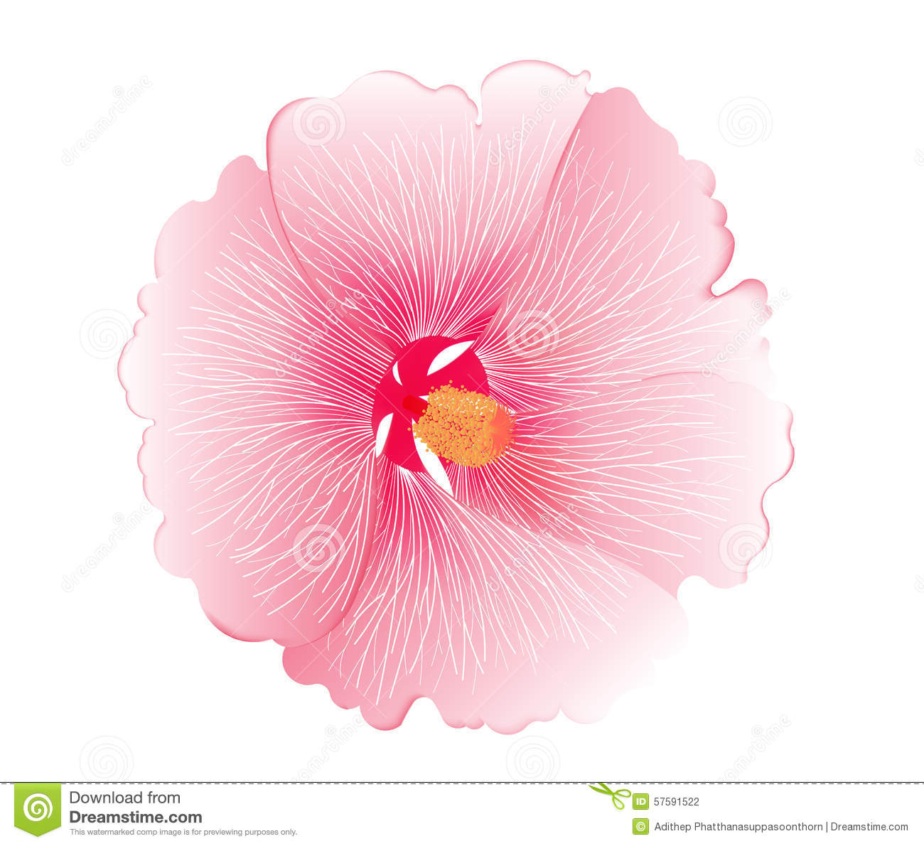 Illustration Of Pink Hibiscus Flower On White Background Stock
