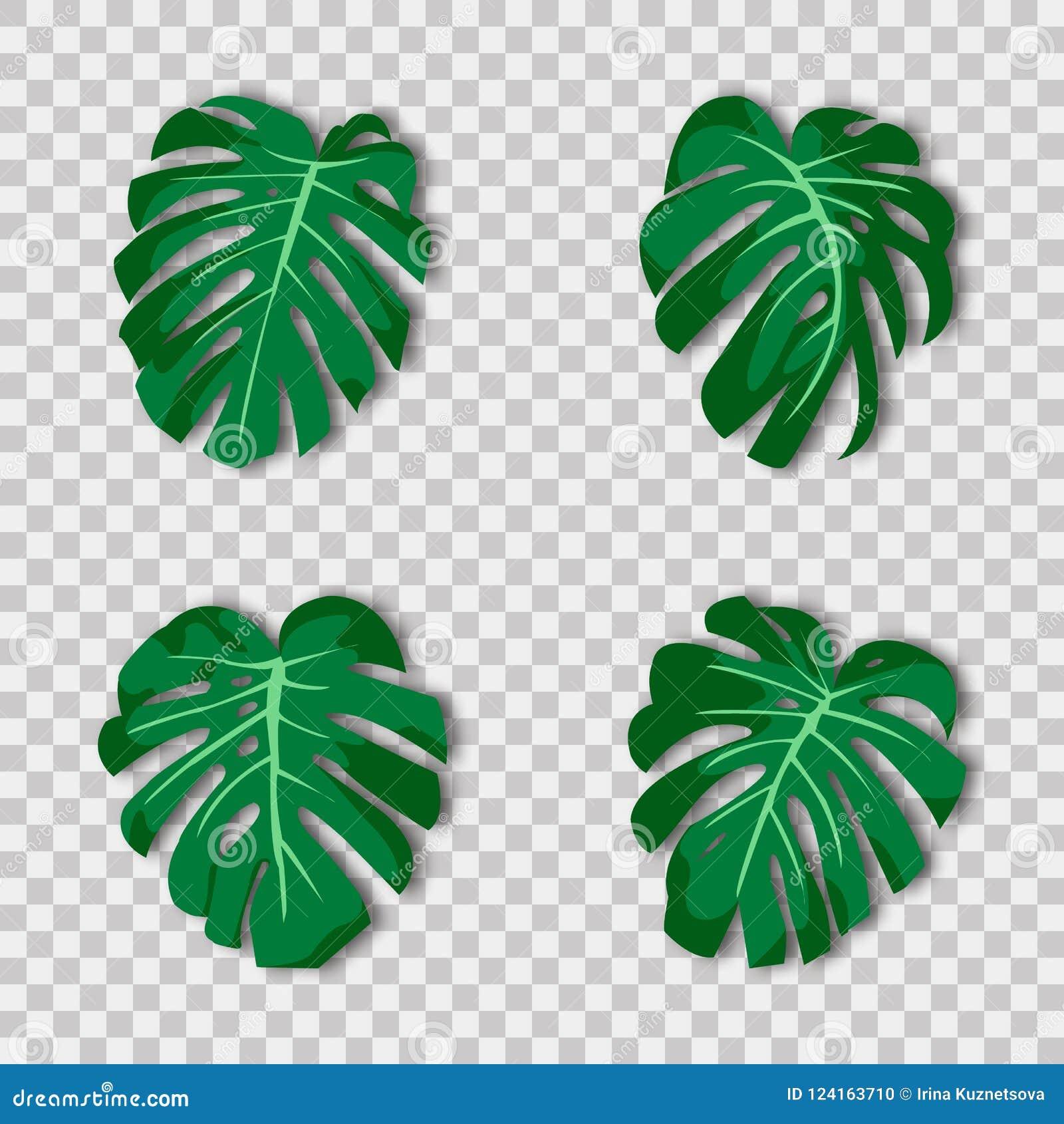 illustration plante verte tropicale exotique feuilles de. Black Bedroom Furniture Sets. Home Design Ideas