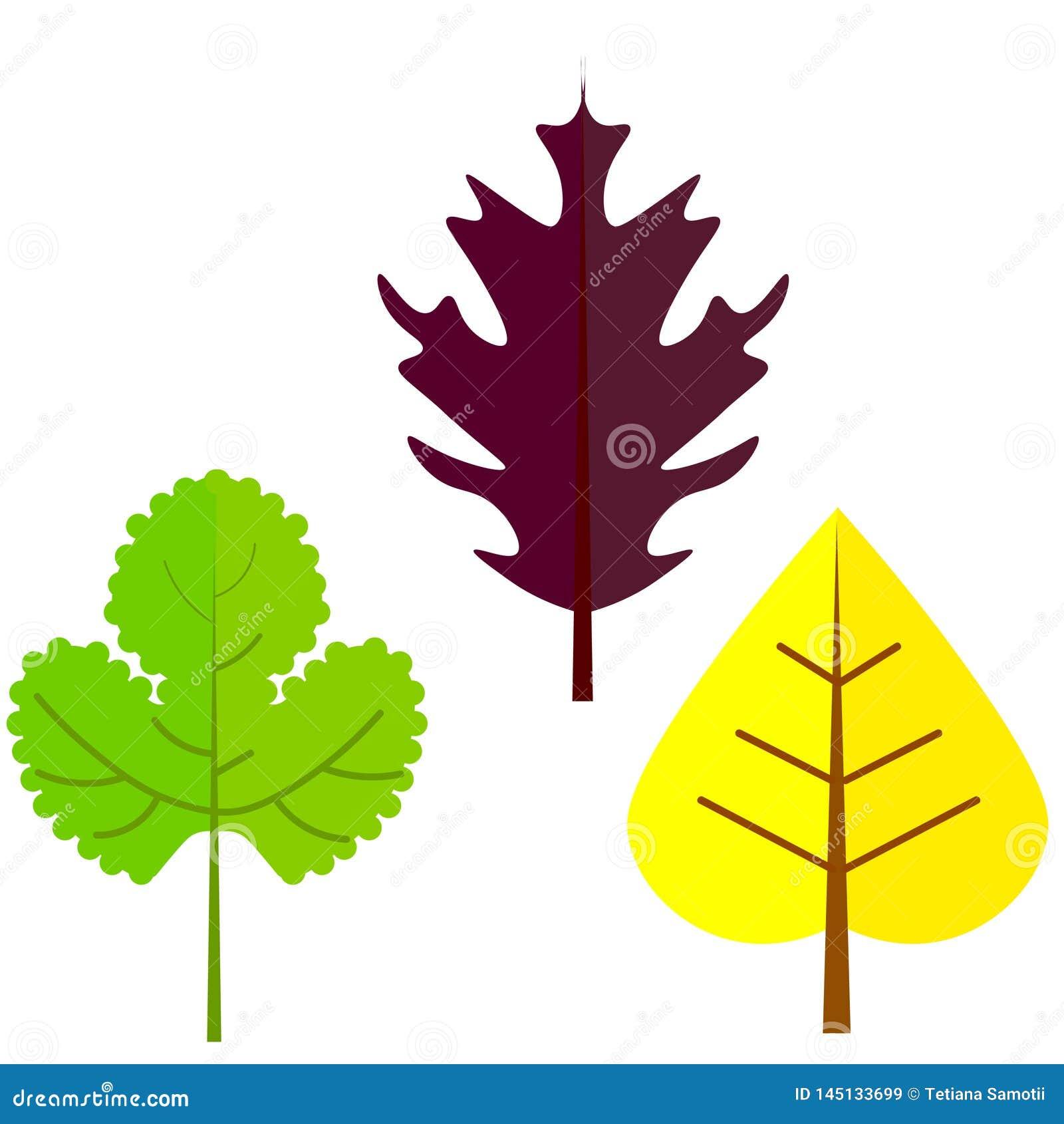 Illustration plate de vecteur : Silhouettes des feuilles d arbre