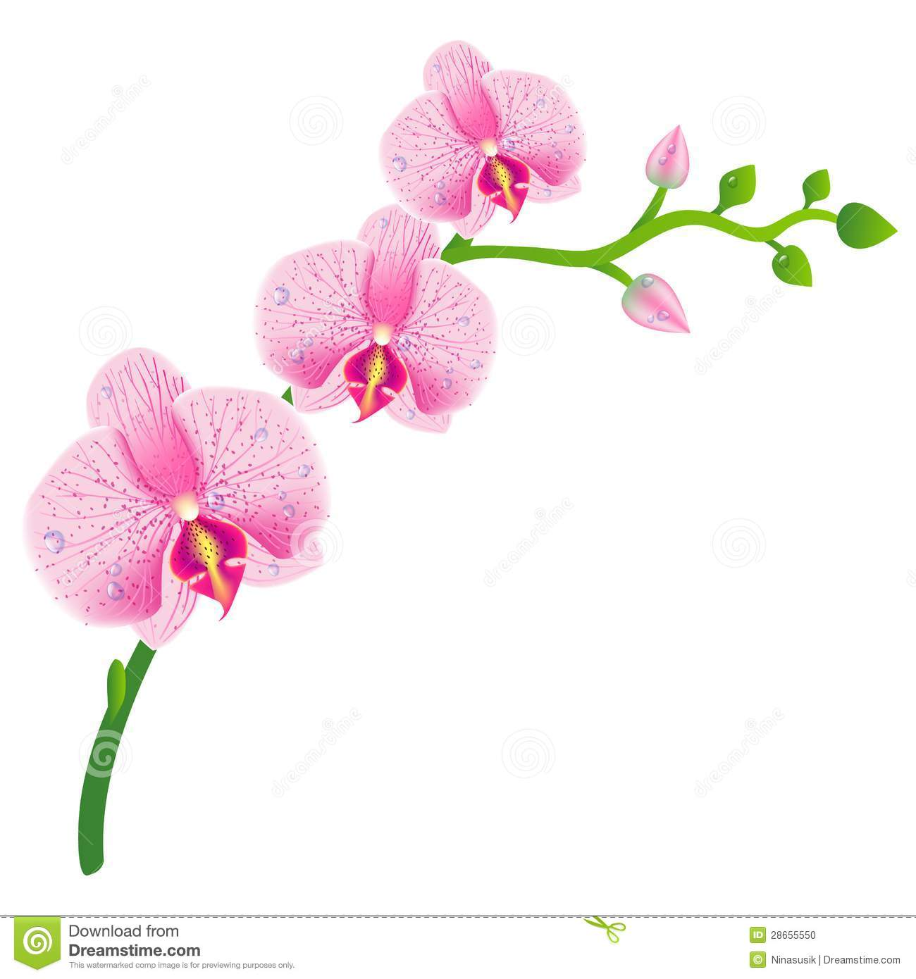 Illustration Of Realistic Orchid Eps 10 Stock Photo Image 28655550