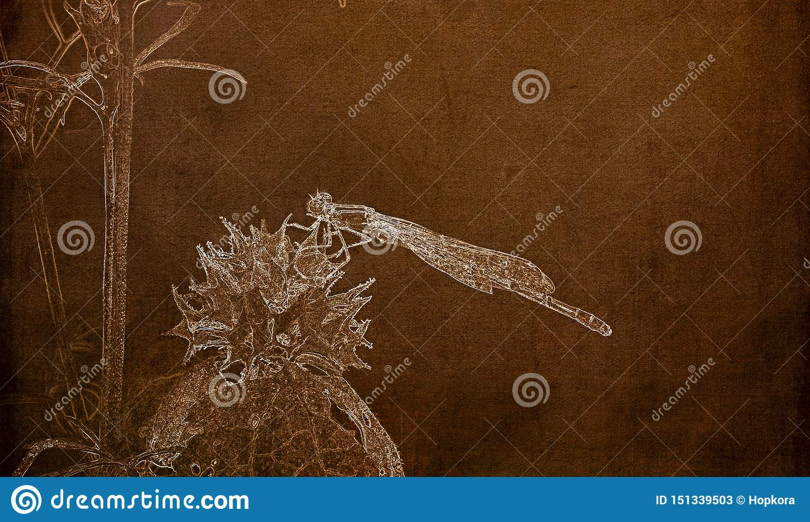 Illustration in Sepia of a Macro of Famiiar Bluet Enallagma civile Resting on a Dried Thistle Flower
