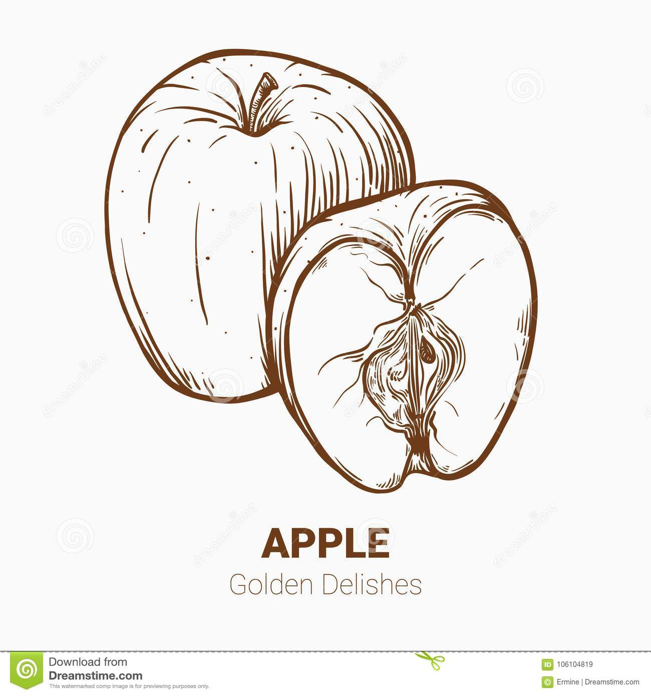 Illustration Set Of Drawing Apples Golden Delicious Elements Ha
