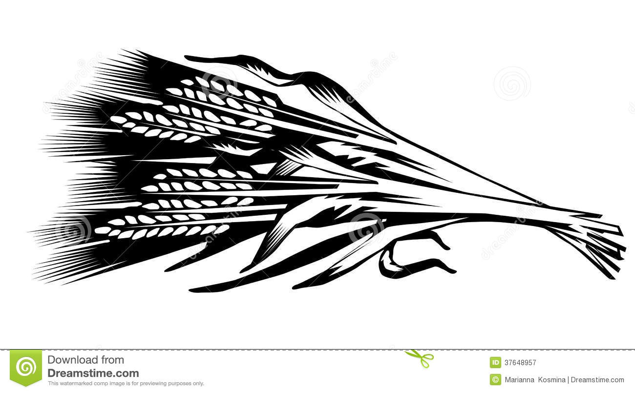 illustration of a sheaf of cones of wheat stock Wheat Harvest Clip Art Wheat Stock Clip Art