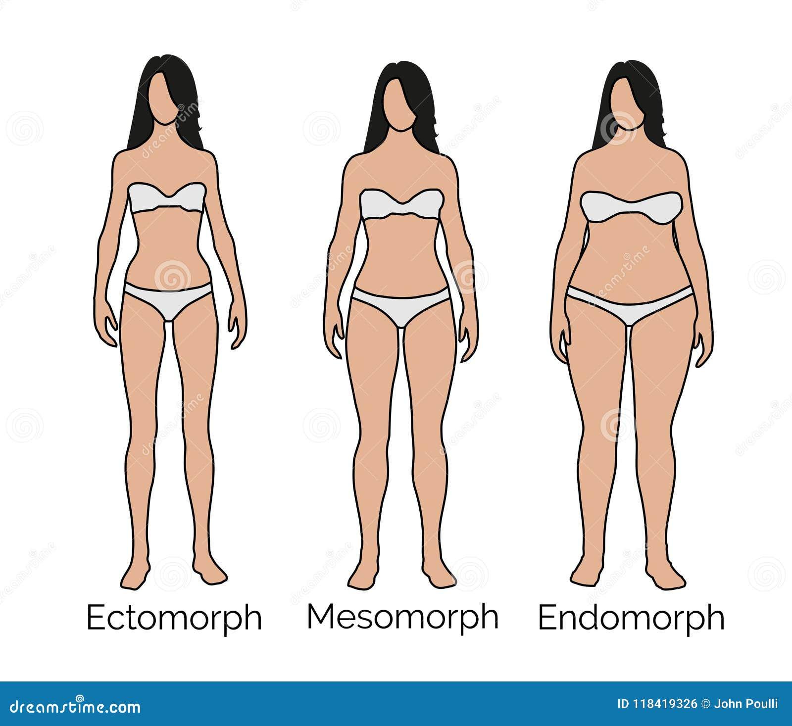 Ectomorph, Mesomorph, Endomorph Female - Small, Medium, Large Body ...