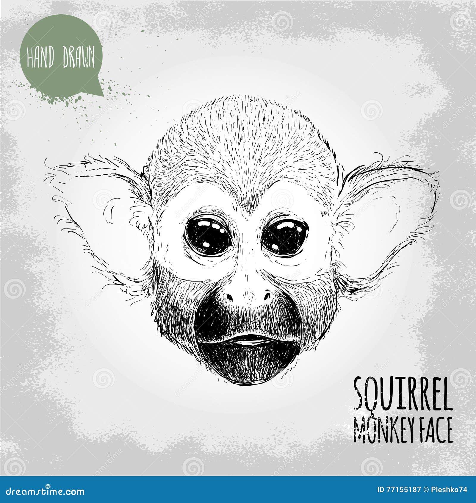 Illustration tirée par la main de style de croquis de visage de singe-écureuil
