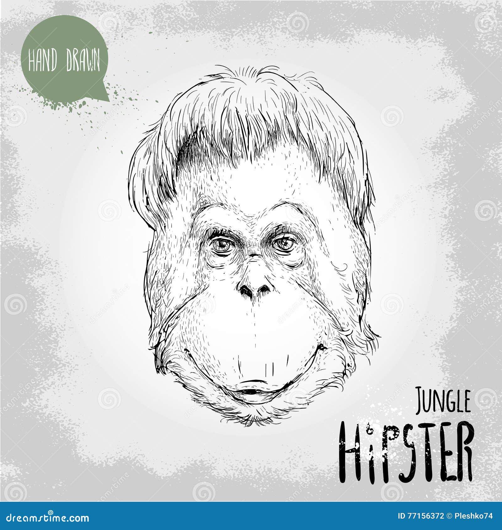 Illustration tirée par la main de style de croquis de visage de singe d orang-outan