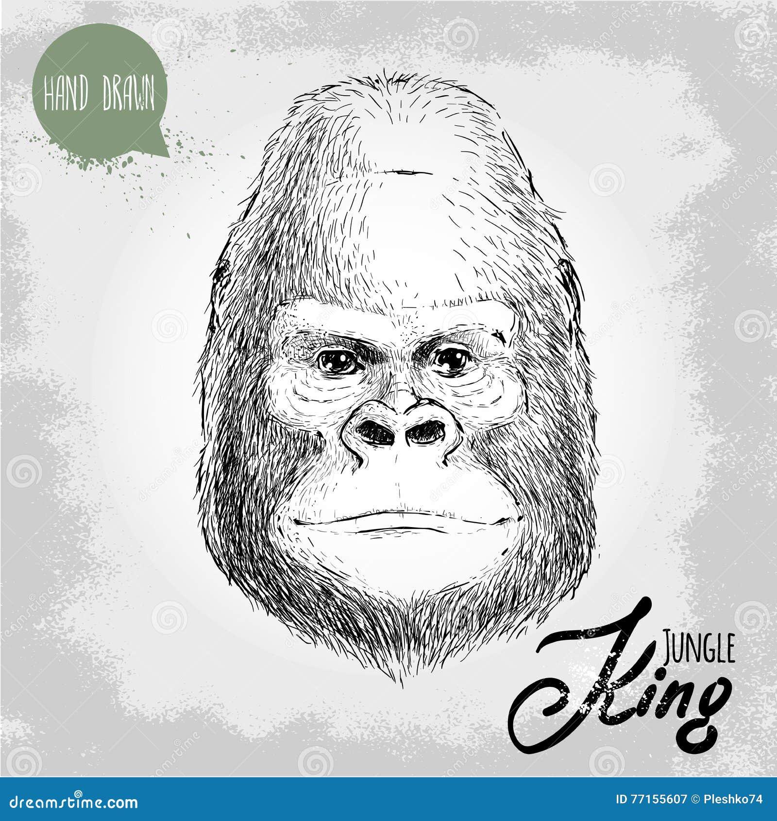 Illustration tirée par la main de style de croquis du visage masculin de singe de gorille