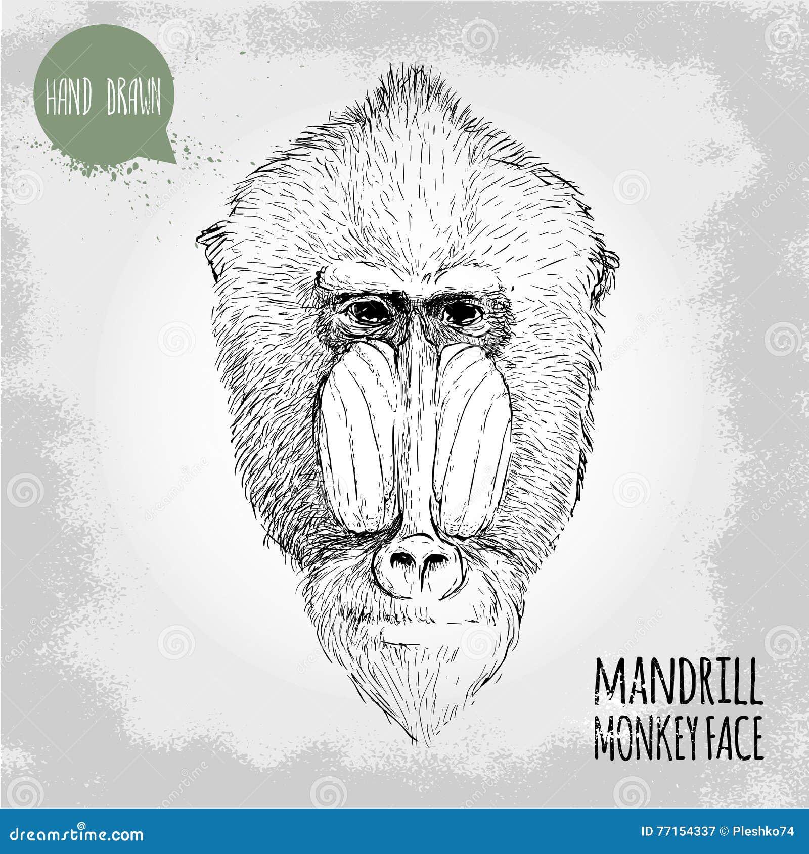 Illustration tirée par la main de style de croquis du visage masculin de singe de mandrill
