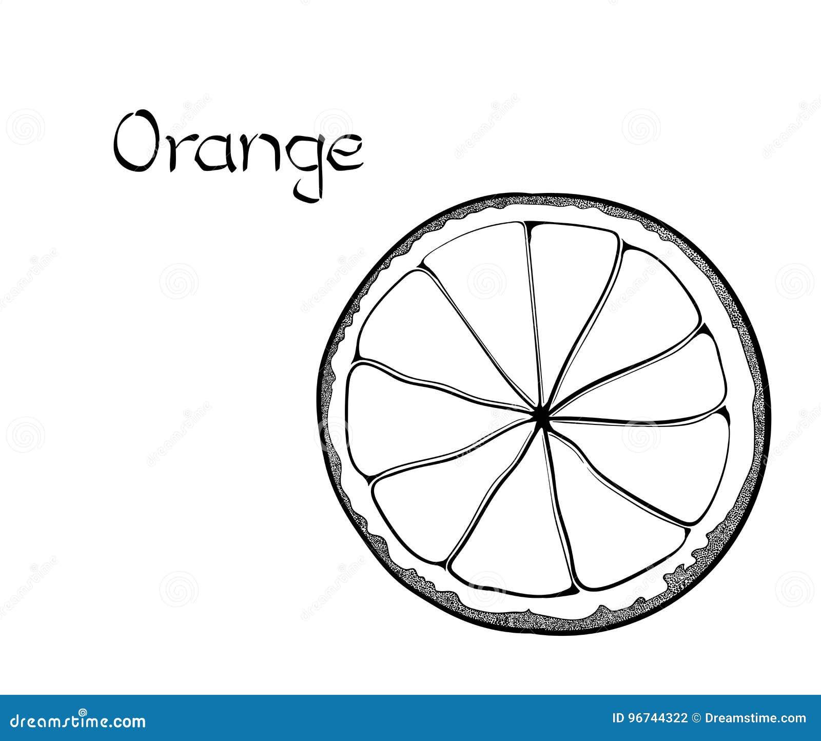 Illustration tirée par la main de traitement saine végétarienne orange de vecteur Utilisation pour la barre, cocktail, insecte, b
