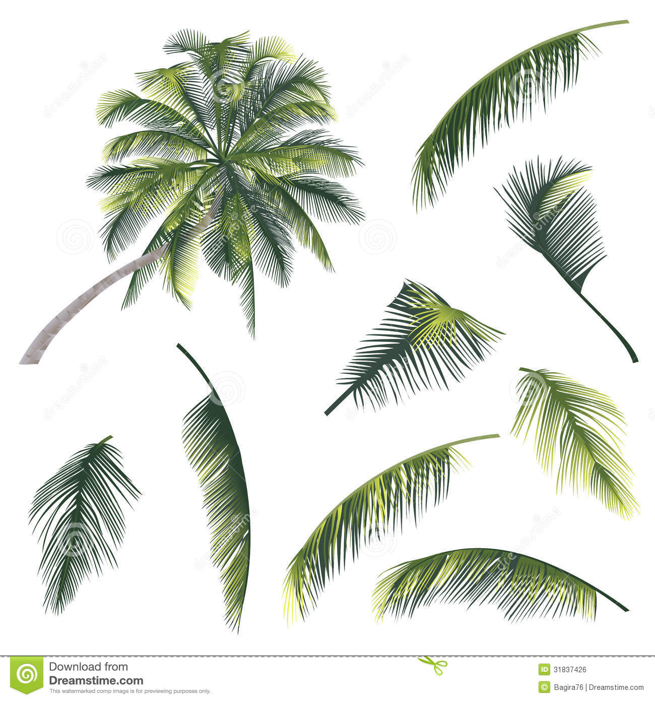 how to draw a palm branch