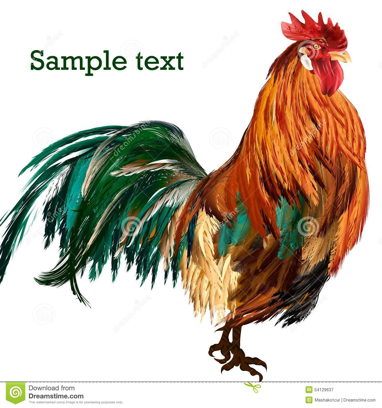 illustration of vector cockerel with colorful feathers stock