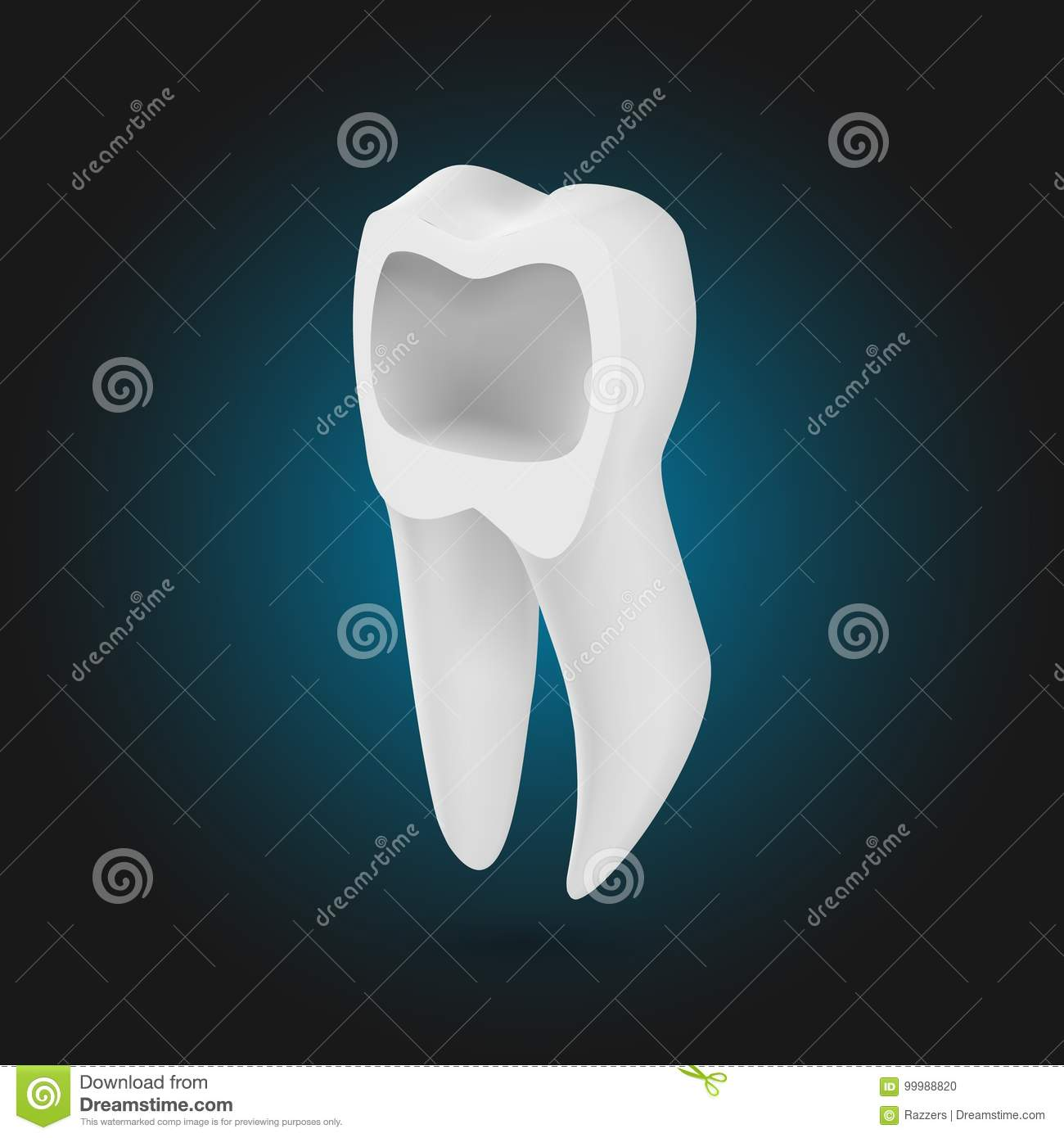 vector realistic tooth 3d teeth with inner part template stock