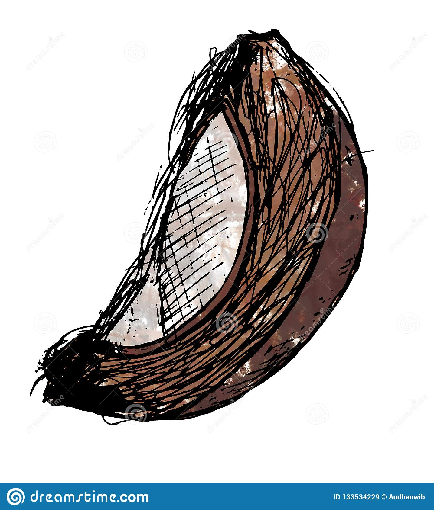 Mature Coconut Wedge Watercolour Illustration