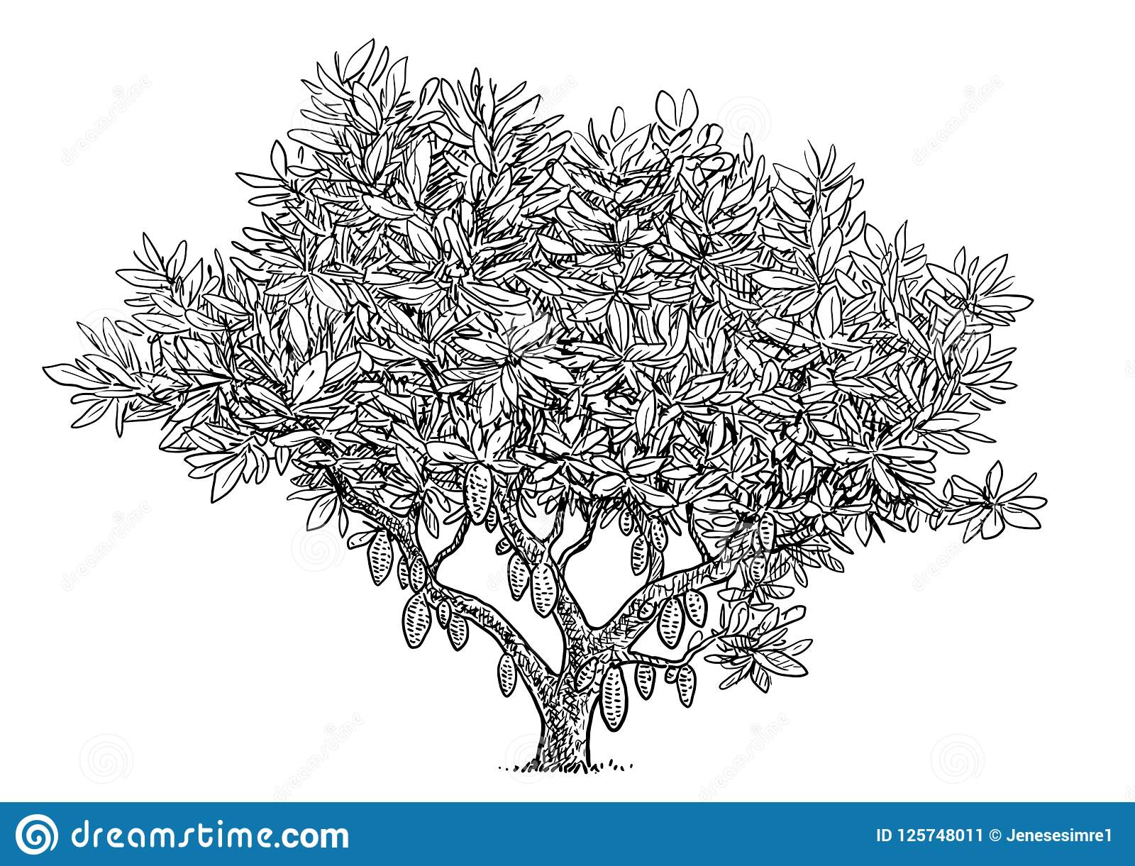 Cocoa Tree Illustration Drawing Engraving Ink Line Art Vector Stock Vector Illustration Of Growth Flora 125748011