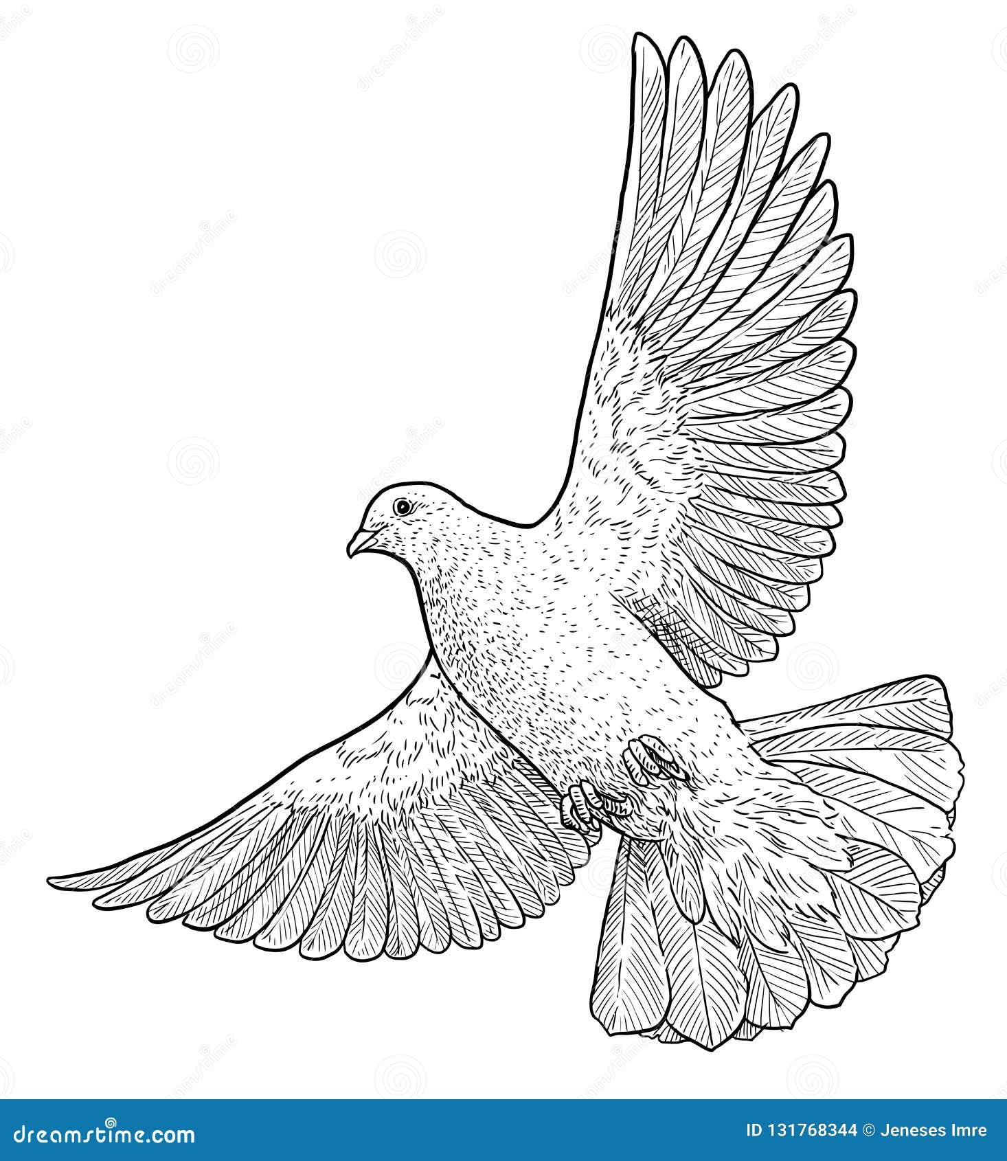 Flying Dove Illustration, Drawing, Engraving, Ink, Line Art