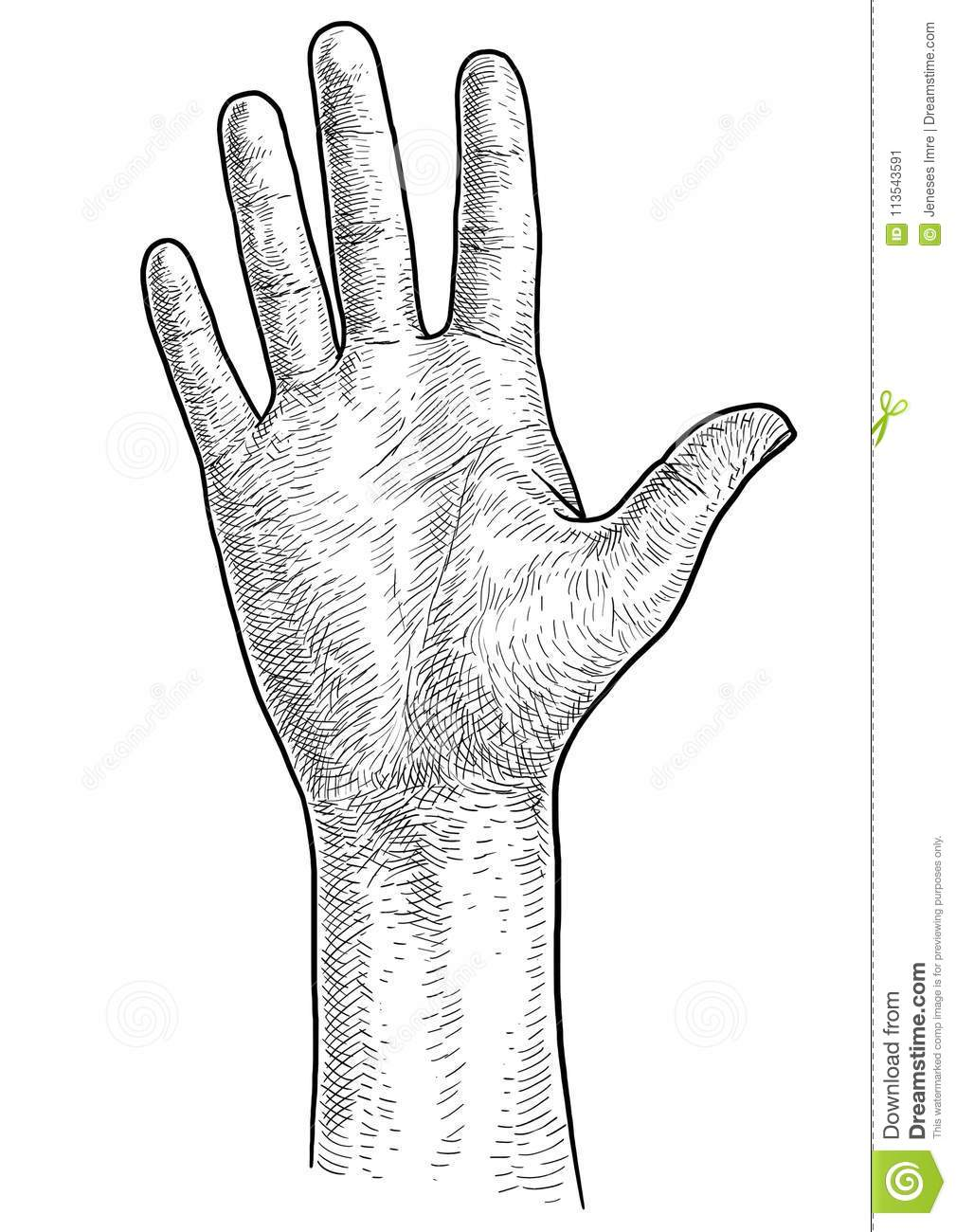 Hand palm illustration drawing engraving ink line art