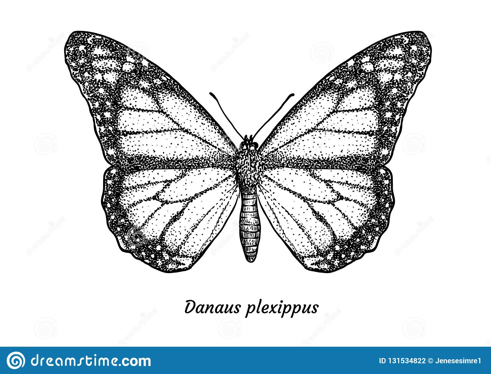 Monarch butterfly illustration drawing engraving ink line art