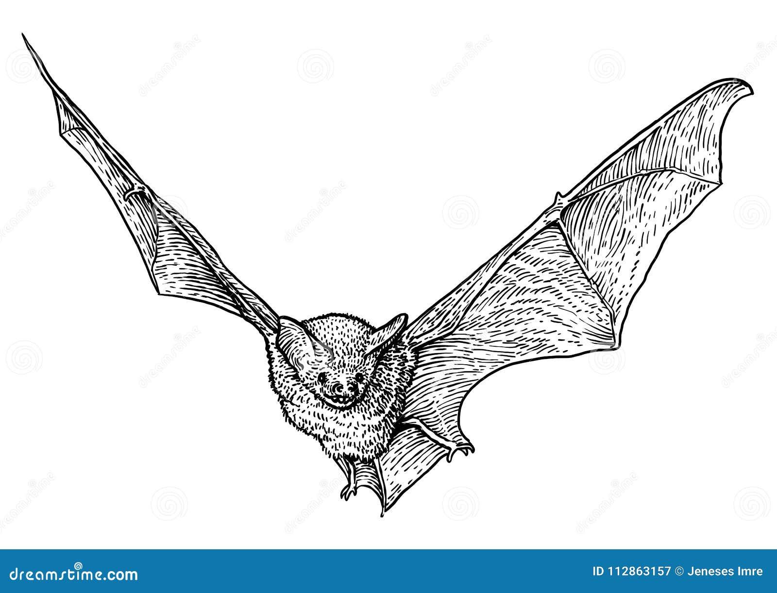 Bat illustration drawing engraving ink line art vector stock