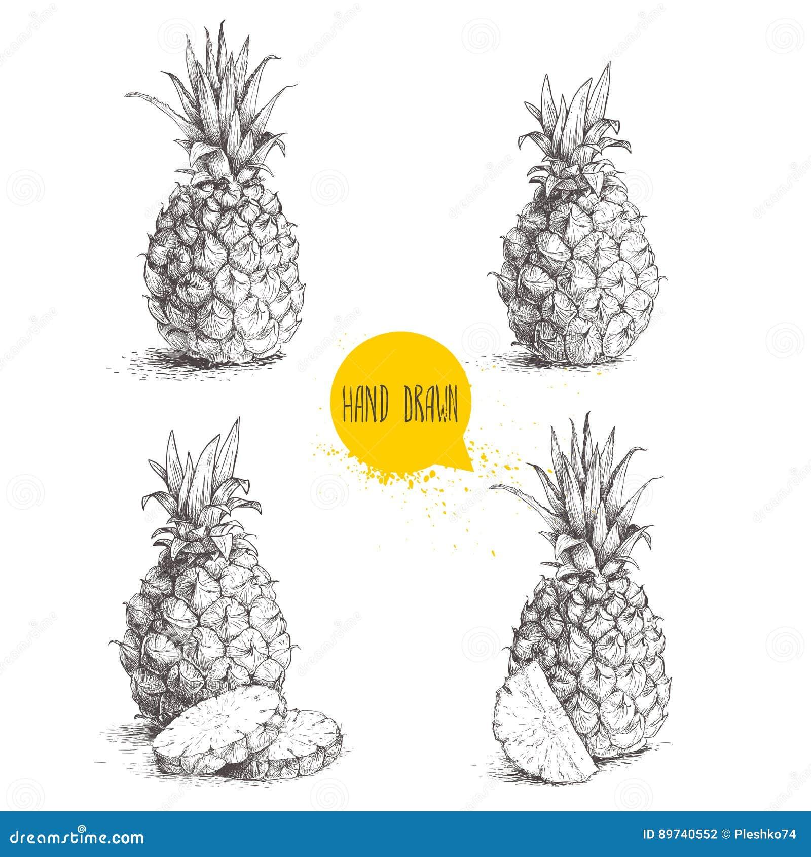 Illustrations réglées de style tiré par la main de croquis des ananas mûrs