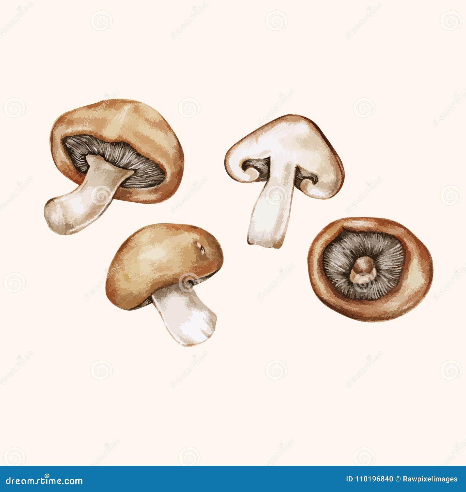 Illustrationteckning av isolerade champinjoner