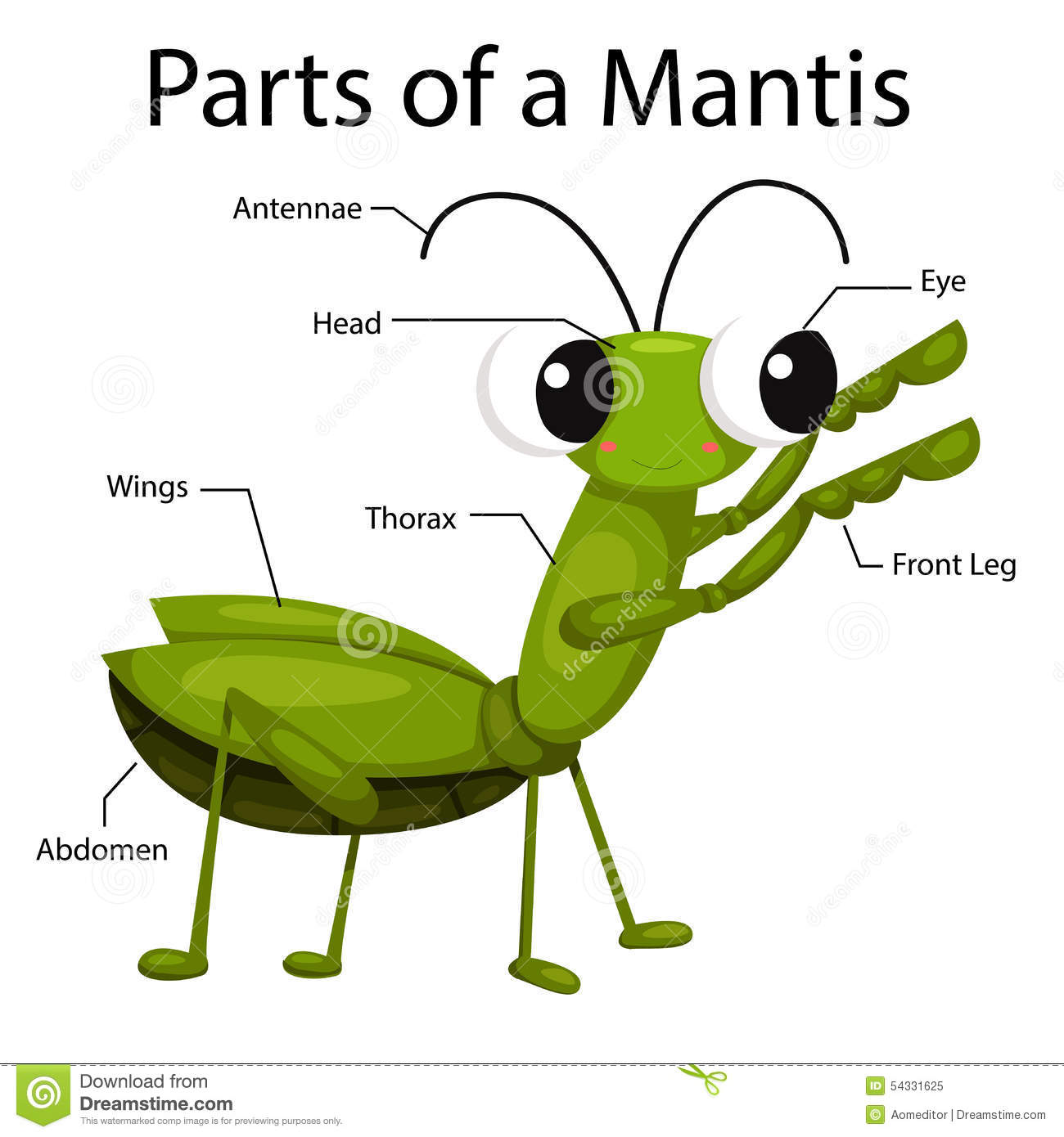 life cycle of a praying mantis