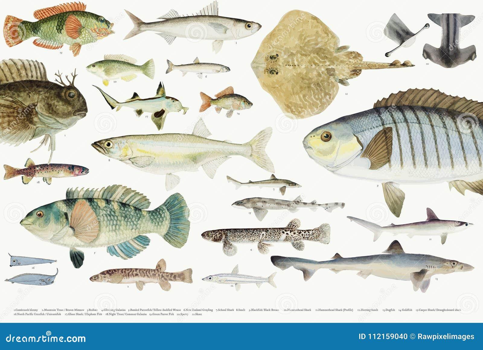 Illustrazione Colorata Della Raccolta Del Disegno Del Pesce