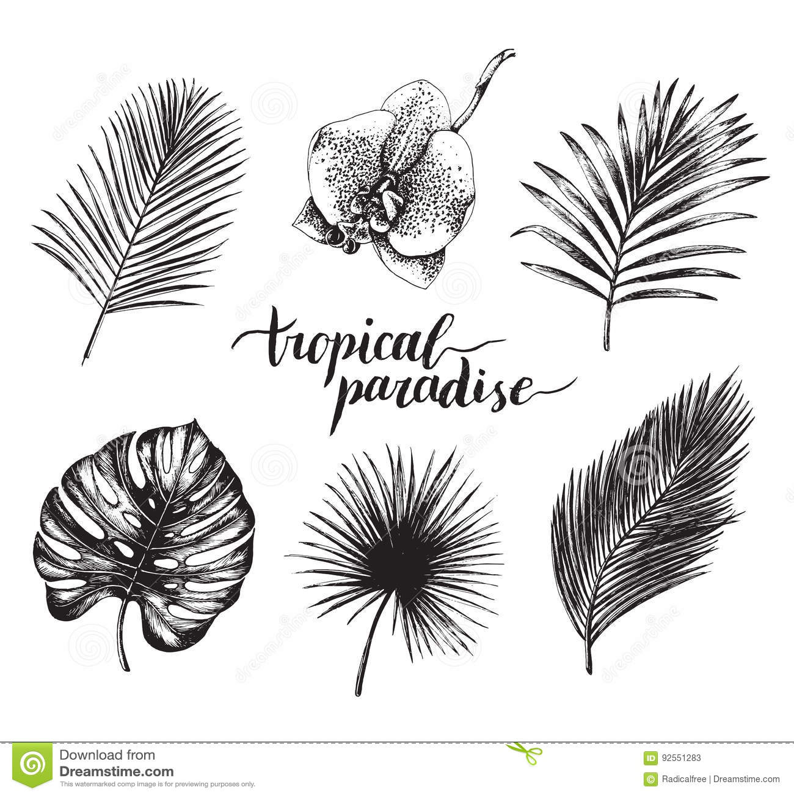 Illustrazione d annata delle foglie di palma di vettore Iscrizione tropicale di paradiso con la raccolta disegnata a mano del fog