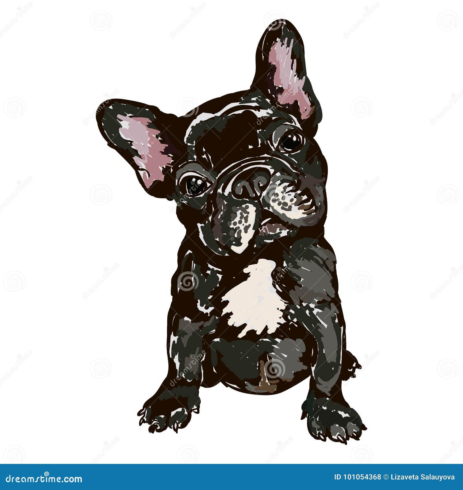 Illustrazione del bulldog francese della razza del cane