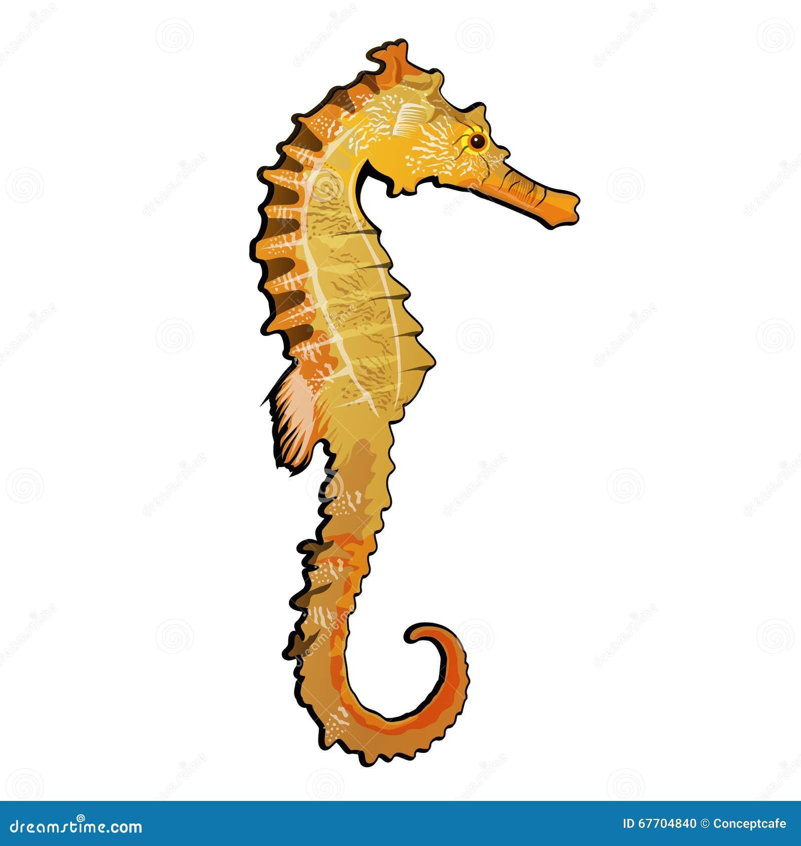 Illustrazione del cavalluccio marino illustrazione for Immagini cavalluccio marino