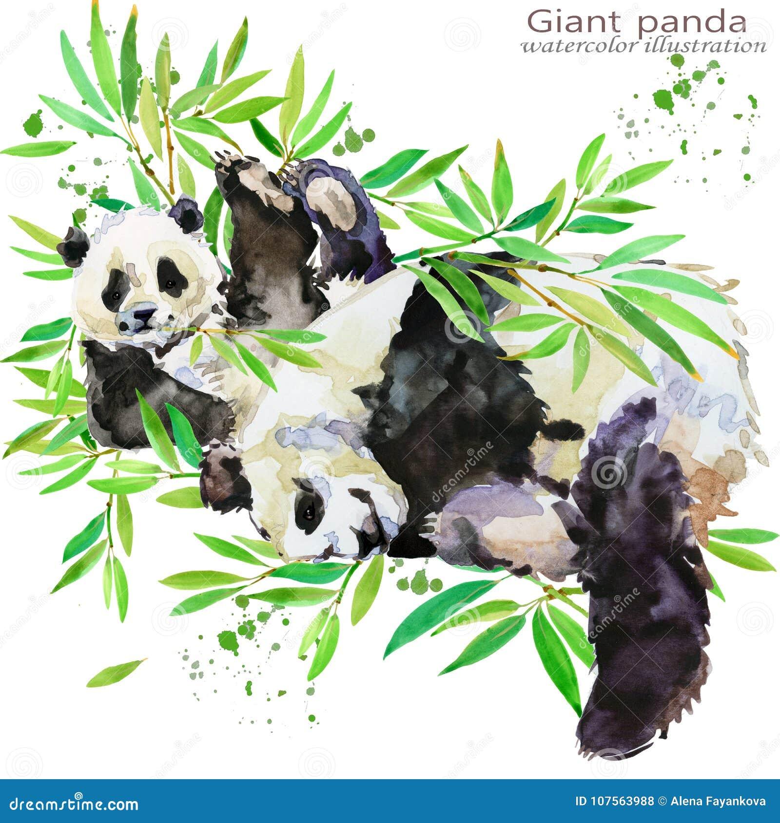 Illustrazione dell acquerello di tiraggio della mano del panda