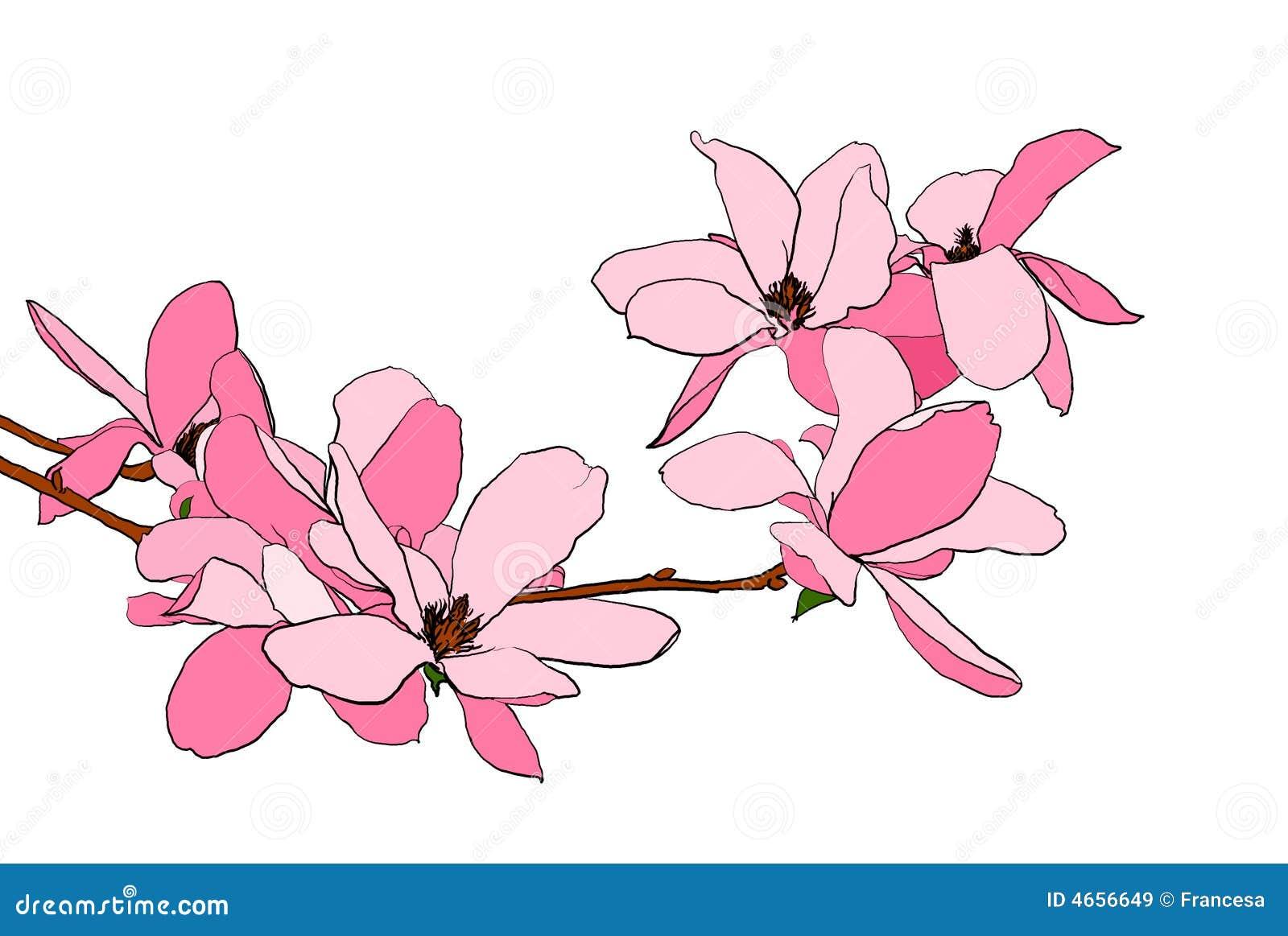 Illustrazione della fioritura della magnolia immagini for Magnolia pianta prezzi