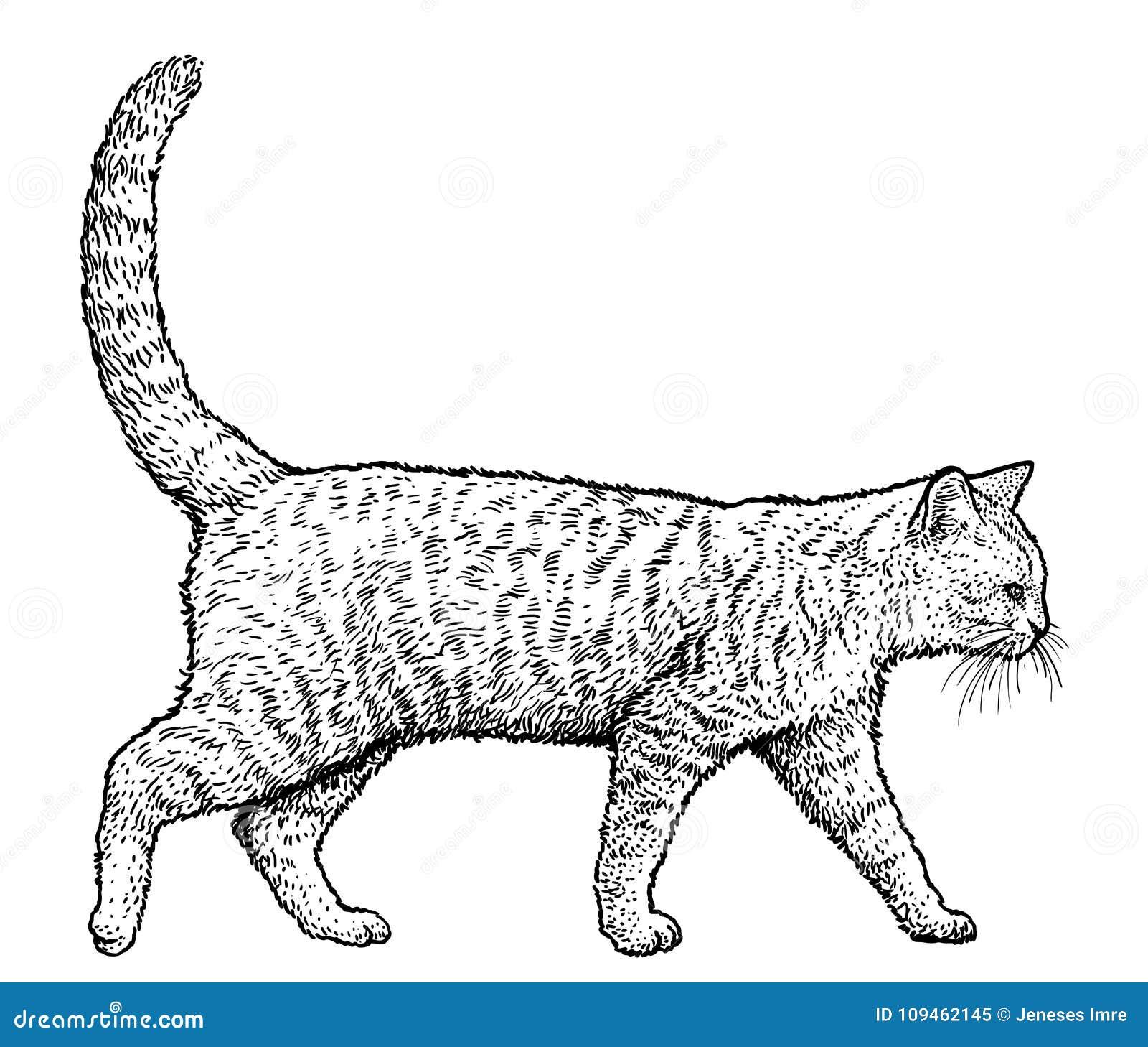 Illustrazione Di Camminata Del Gatto Disegno Incisione Inchiostro