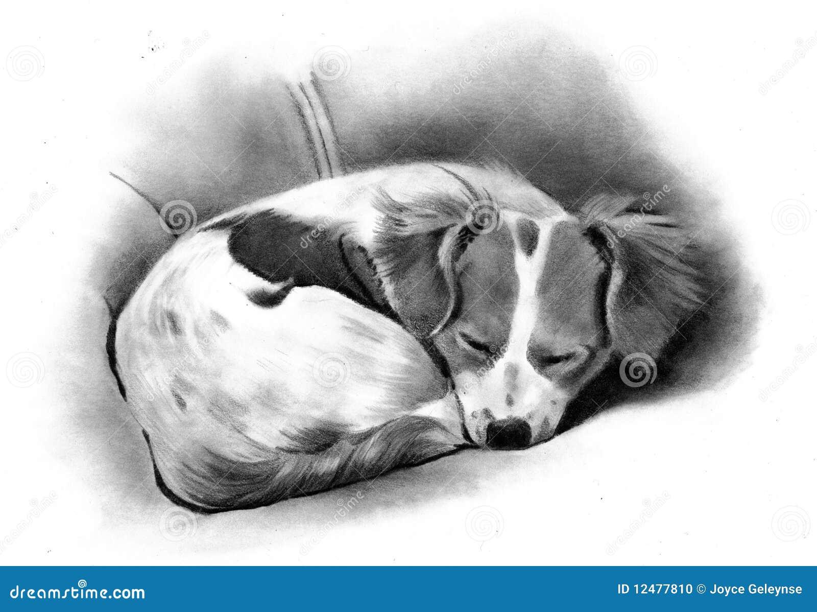 Cane Che Dorme Disegno.Illustrazione Di Matita Di Un Cane Di Sonno Illustrazione Di Stock