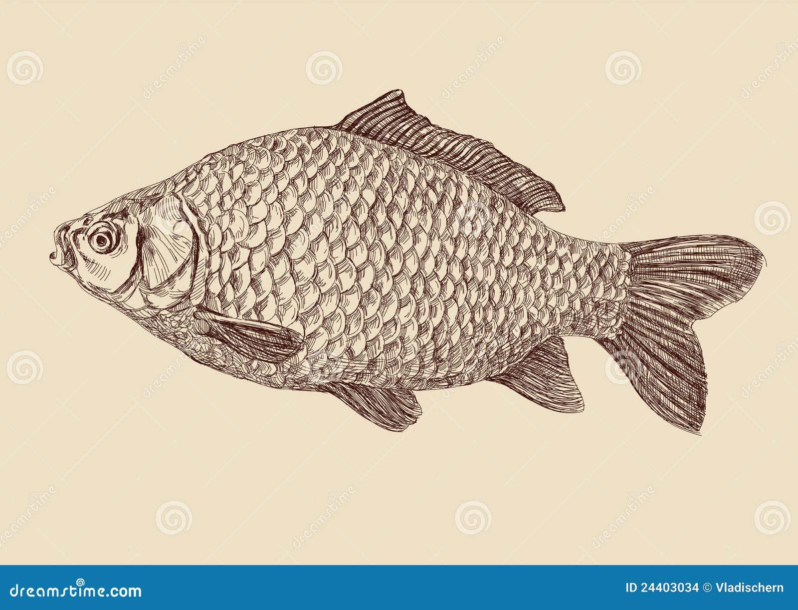 Illustrazione di vettore dell illustrazione dei pesci della carpa