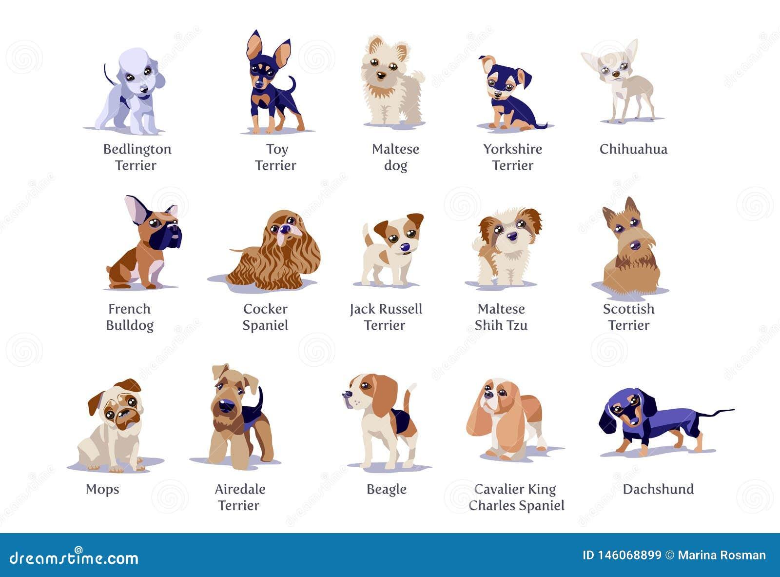 Illustrazione di vettore delle razze differenti dei cuccioli dei cani