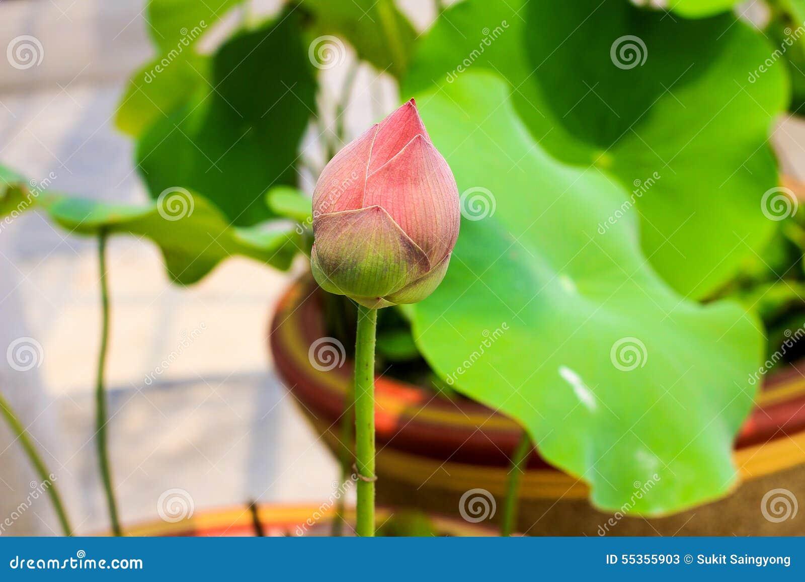 Illustrazione di zen del fiore di loto