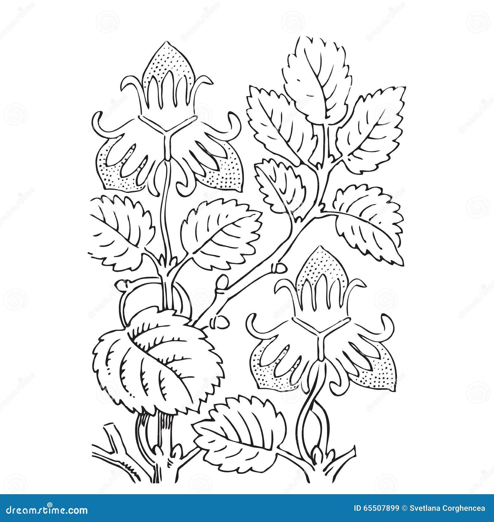 Illustrazione Disegnata A Mano Dei Cespugli Di Fragola Ramifichi Con