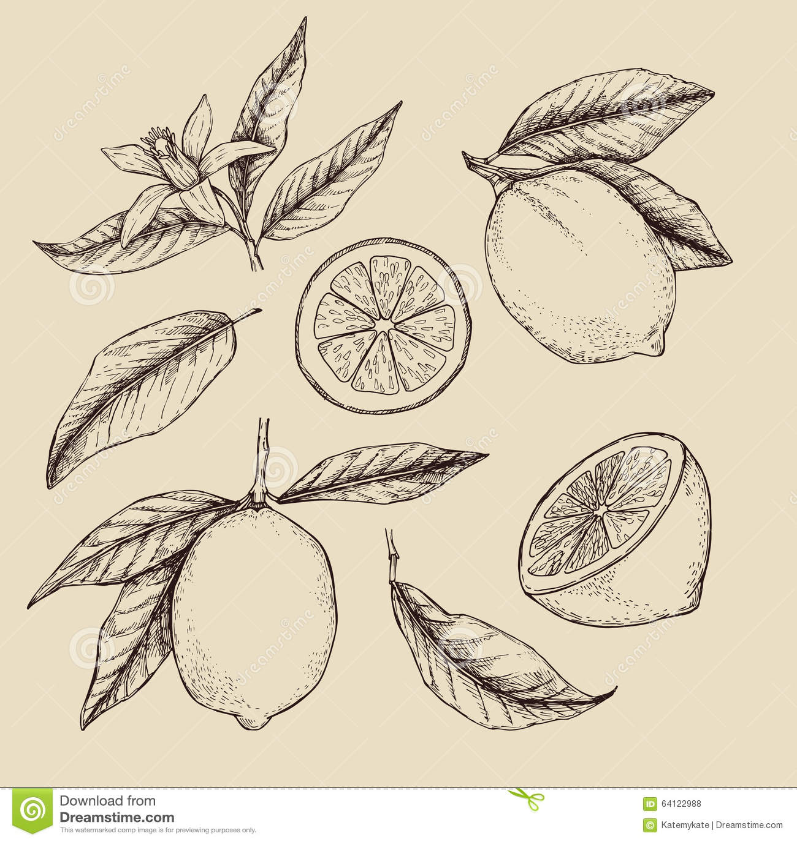 Illustrazione disegnata a mano di vettore - collezioni di limoni