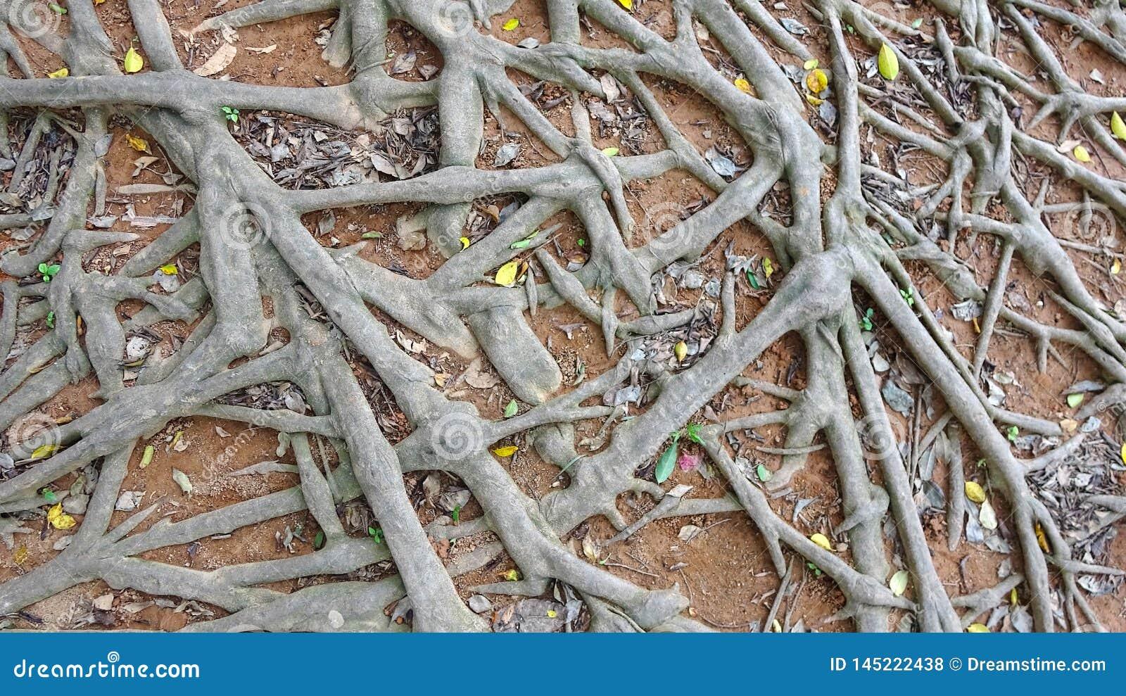 Illustrazione sudicia del fondo delle radici dell albero