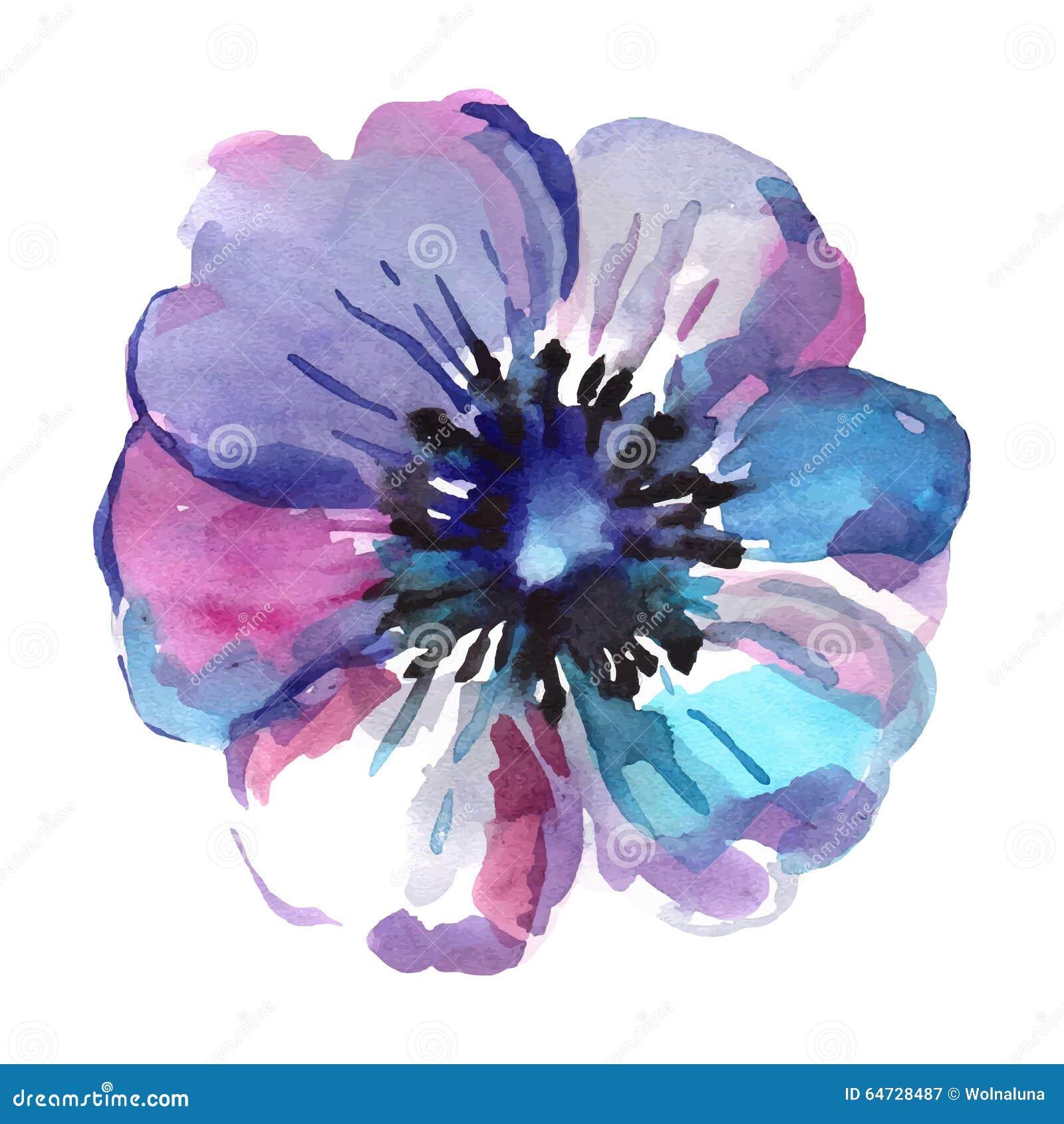 Illustrazioni dell acquerello del fiore blu