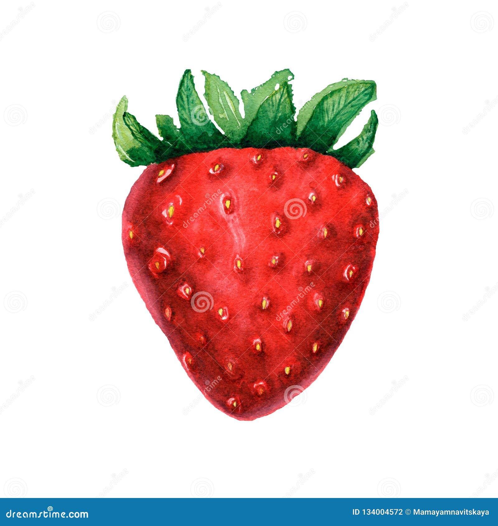 Illustrazioni della bacca del dessert Fragola dell acquerello Immagine isolata della bacca su fondo bianco Alimento vegetariano