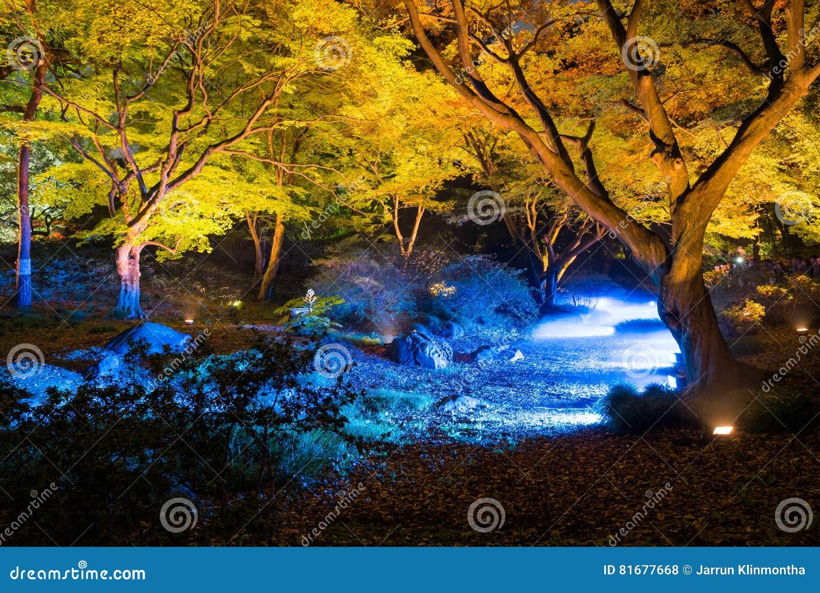 Iluminação do outono