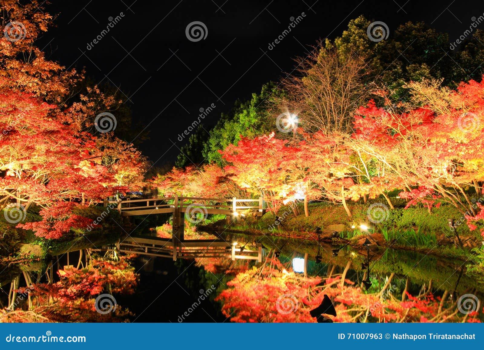 Iluminação em Nabana nenhum Sato, Mie, Japão, com as folhas de outono atrativas